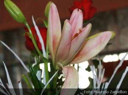 Lilium Giglio Piante Da Appartamento Liliaceae