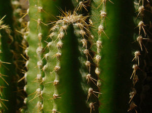 Piante grasse archivi for Foto piante grasse particolari