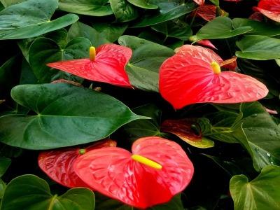 Piante vivai il posto giusto per cercare una pianta - Le piu belle piante da giardino ...