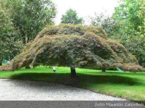 alberi archivi